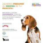 Participa y gana con tu perro en el concurso 'Tu 100×100 Mascota'
