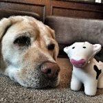 Hoteles 'pet friendly' para llevar a tu mascota a cualquier parte del mundo