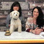Cada vez más hoteles se suman al movimiento 'pet friendly'