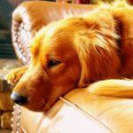 Ansiedad por separación en perros: trucos y soluciones