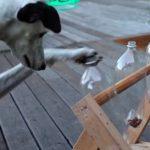 Cómo jugar con los cachorros y cómo educarlos