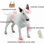 Leishmaniasis: ¿qué es y cómo afecta a los perros?