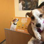 'El Refugio' pone en marcha su Campaña de vacunación e Identificación de perros y gatos