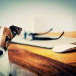 Perros y gatos llegan a tener una inteligencia como las de niños de hasta 7 años
