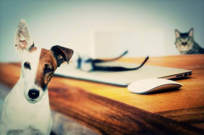 Perros y gatos (Foto: Pixabay)