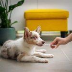 Visitar al veterinario más de una vez al año puede salvar la vida de tu mascota