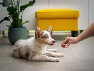 Visitar al veterinario