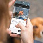 Una app te ayuda a localizar a tu mascota perdida