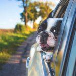 Cómo llevar a nuestras mascotas seguras en el coche