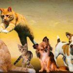 ¿Cuánto cuesta tener un perro y un gato al año?: las cifras definitivas