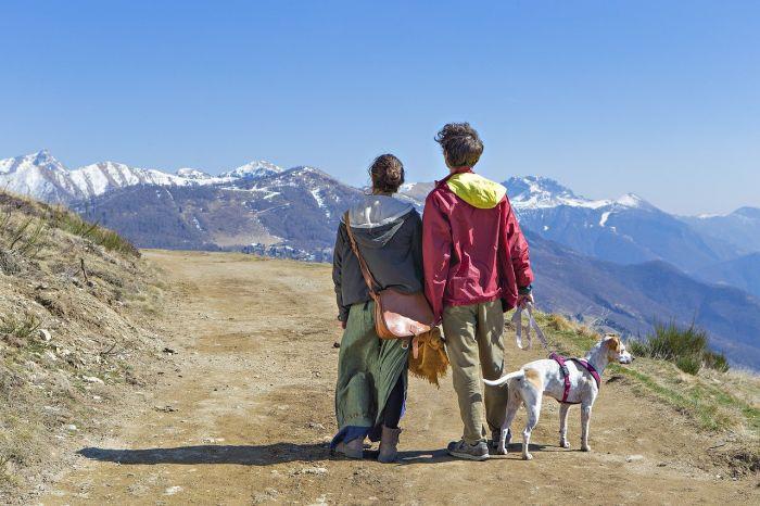 viajar con mascota perro vacaciones viaje