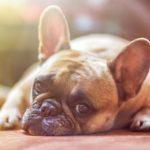 Cambio de hora: tu perro puede ser sensible
