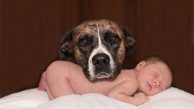perro y niños bebe