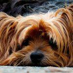 En España solo el 2% de las mascotas cuenta con un seguro de salud
