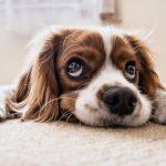 10 señales que demuestran la buena salud del perro