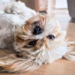 La laserterapia, tratamiento no invasivo e indoloro para veterinaria