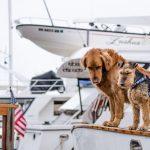Consejos y requisitos para ir de viaje y de vacaciones con perro