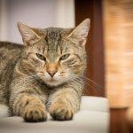 Entra en vigor el Convenio Europeo de Protección Animal: se acabó cortar rabos, orejas, cuerdas vocales…