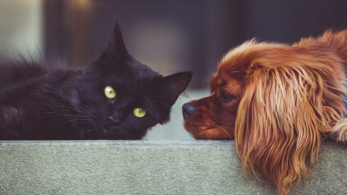 gato perro