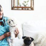 Veterinarios a domicilio, un nuevo servicio en Madrid y Barcelona