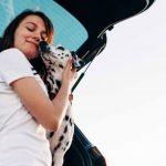 5 errores a la hora de transportar mascotas en el coche