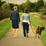 El 40% de las casas rurales en España admiten mascotas