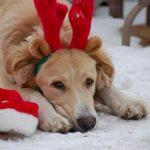 Accesorios y suministros para regalar esta Navidad a las mascotas