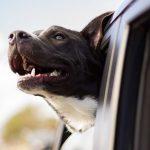 Vacaciones con mascotas: consejos