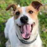 Sólo el 26% de los perros en España son mestizos o sin raza pura