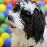 Una piscina de bolas para perros en Madrid