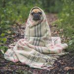 Cuidado con los localizadores GPS de mascotas: tienen vulnerabilidades