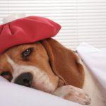Productos y alimentos tóxicos para los perros