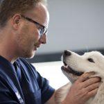 Los beneficios de la cirugía sin sangrado en veterinaria