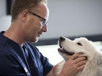 Veterinario y perro (Foto: Anicura)
